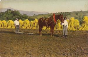 Farmers and Horse Hay Making Scene