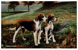 Dog Tuck's no.  4403  Foxhounds