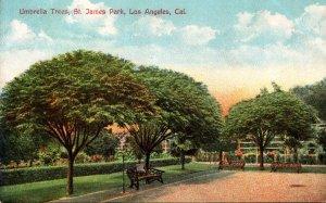 California Los Angeles St James Park Showing Umbrella Trees