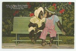 Linen Postcard ~ St Pete Petersburg Fl ~  Monkeys / Chimpamzees ~ Green Bench