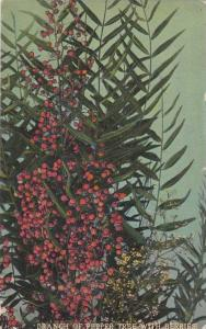 Branch of Pepper Tree with Berries,California, PU-1915