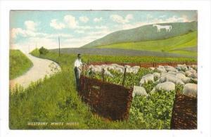The Westbury (or Bratton) White Horse ,England, 00-10s : Sheepherder