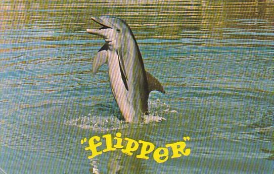 Flipper In Florida