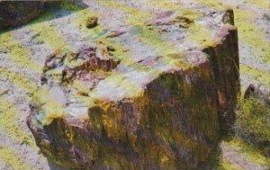 Arizona Petrified Forest National Park Monument Section Of Petrified Log