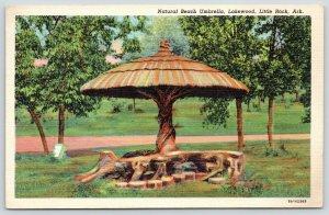 Little Rock AR~Is It A Tree, Or Is It An Umbrella? It's Both As God Intends~1938