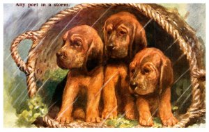 Dog ,Any Port in a Storm , 3 puppies
