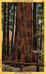 California Santa Cruz County Big Trees Park Neck Breaker