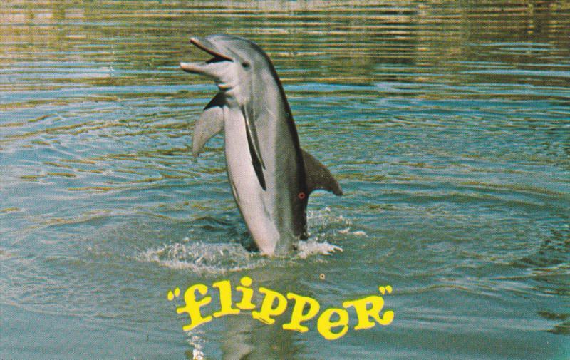 "Flipper"" TV show Dolphin , Seaquarium , MIAMI , Florida , 1960s ..."