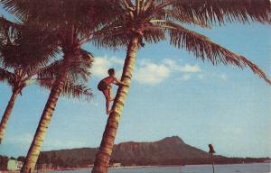 Waikiki Beach Hawaii~Island Boy Climbing Coconut Tree~1950s Postcard
