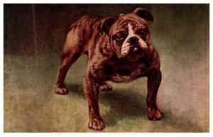 Dog , Bull Dog