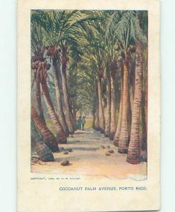 Damaged Trimmed Pre-1907 COCONUT PALM AVENUE State Of Puerto Rico PR hp9408