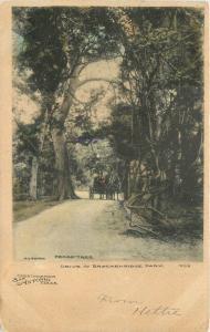 Backenridge Park Drive Pecan Tree 1907 San Antonio Texas Postcard Tengg 12312