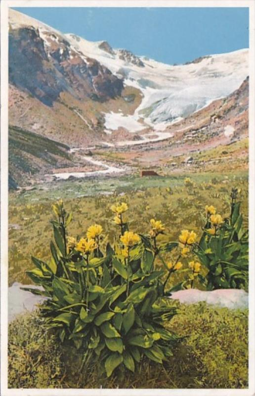 Switzerland Alpine Flowers Fextal Engadin