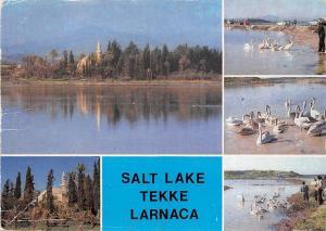 BR8848 Salt Lake Tekke Larnaca  cyprus