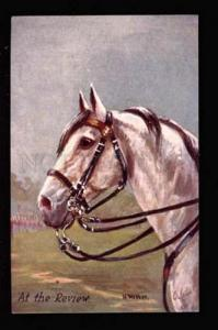 039062 Head of White HORSE by H. WALKER old TUCK