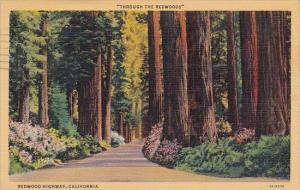Through The Redwoods Redwood Highway California 1941 Curteiclh