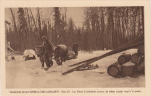 Catholic Missionaries Hauling Cut Trees Up From River, Northwest Territory, C...