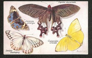 Butterflies On The Wing Perforated Papilio Dasarado A. L. West Artist Postcard