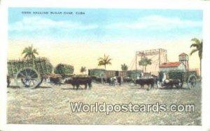 Oxen Hauling Sugar Cane Republic of Cuba Unused