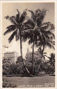 Coconut Palms In Bayfront Park Sarasota Florida 1938 Real Photo