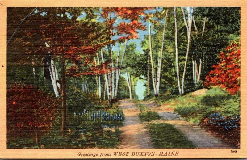 Maine Greetings From West Buxton 1951