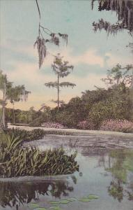 Florida Wakulla Springs On The Jungle Cruise Albertype