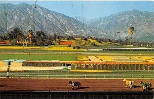 Horse Racing Unused