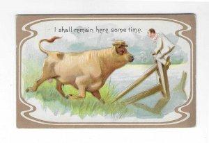 Vtg 1911 Comical Funny Animal Bull Postcard