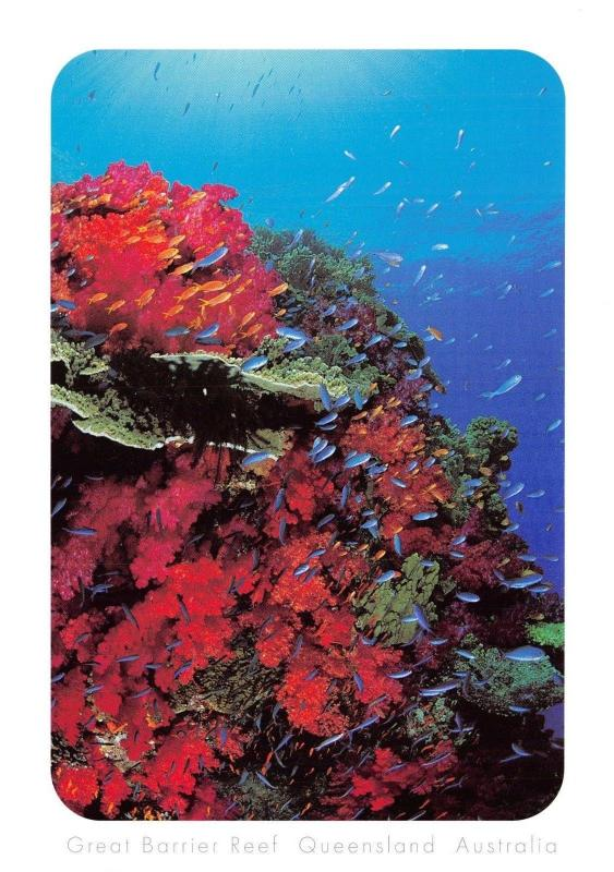 Postcard Coral Cliff Face on the Great Barrier Reef, Queensland, Australia E29