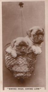 Acrobat Circus Dog Daredevil Antique German Real Photo Cigarette Card
