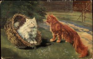Fluffy White Cat & Fluffy Orange Cat c1910 A/S Postcard