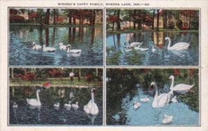 Indiana Winona Lake Family Of White Swans