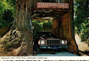 California Klamath The Klamath Tour Thru Tree