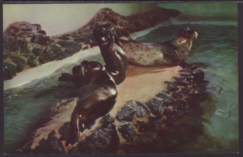 Leopard Seals Ocean Aquarium Hermosa Beach Ca Postcard