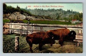 Portland OR-Oregon, Buffalo In City Park, Vintage Postcard