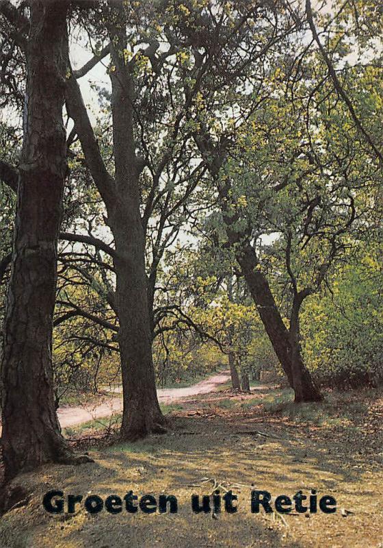Belgium Groeten uit Retie Trees Landscape Road Path