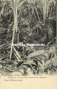 german new guinea, Kaiser-Wilhelmsland, Beliao Papua chopping Sago Palm (1904)