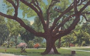 Florida Tampa The Old Oak In Tampa University Grounds 1958