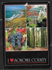 California, Sonoma County, wine, redwoods, used 1994