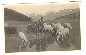 RP, Shepherd, Sheep, Switzerland, 1920-1940s