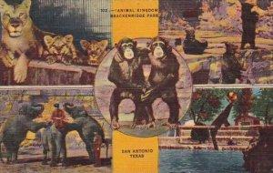 Animal Kingdom Brackenridge Park San Antonio Texas 1949