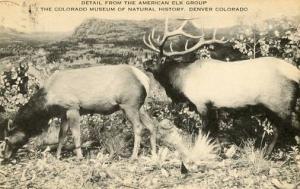 CO - Denver. American Elk Group
