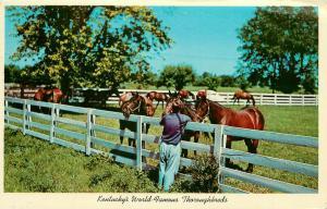 Blue Grass Horse Farm Ketucky KY Thoroughbreds pm 1973 Postcard