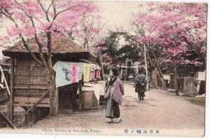 Cherry Blossom at Mukojima Tokyo