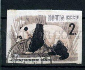 506452 USSR 1964 year anniversary Moscow Zoo animals panda
