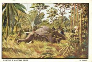 belgian congo, The Elephant Hunt (1930s) Compagnie Belge Maritime Postcard