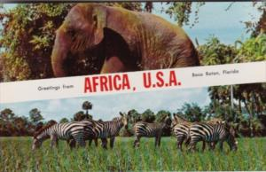 Alabama Boca Raton Greetings From Africa U S A With Elephant & Zebras