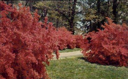 Winterthur Gardens - Wilmington, Delaware DE