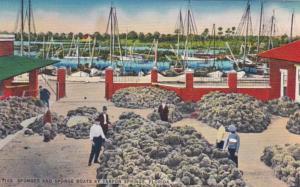 Florida Tarpon Springs Sponges and Sponge Boats 1958