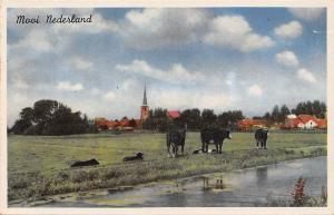 Netherlands Landscape: Mooi Nederland, Cattle, Paysage Souvenir